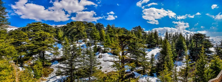 cedars-of-god